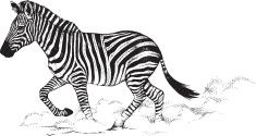 EDS Zebra